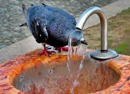 От затяжной жары, в Чехии умерло более 1000 кур.